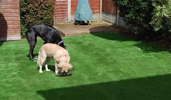 artificial grass 4